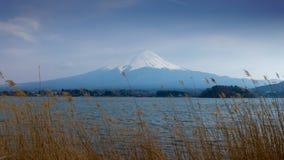 Fujisan en Meer Kawaguchi met gouden gras in voorgrond stock afbeelding