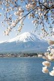 Fujisan en Sakura bij Meer Kawaguchiko Stock Foto
