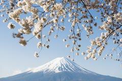 Fujisan en Sakura bij Meer Kawaguchiko Royalty-vrije Stock Foto's