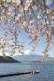 Fujisan en Sakura bij Meer Kawaguchiko Royalty-vrije Stock Foto