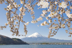 Fujisan en Sakura bij Meer Kawaguchiko Stock Afbeelding