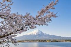 Fujisan en Sakura bij Meer Kawaguchiko Stock Afbeeldingen
