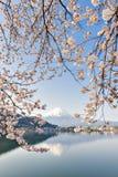 Fujisan en Sakura bij Meer Kawaguchiko Stock Fotografie