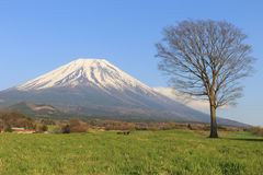 Fujisan Royalty Free Stock Photo