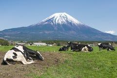 Fujisan i krowy Zdjęcie Stock