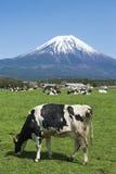 Fujisan i krowy Zdjęcie Royalty Free