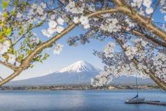 Fujisan i Sakura przy Jeziornym Kawaguchiko Obrazy Stock