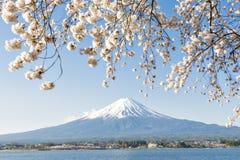 Fujisan i Sakura przy Jeziornym Kawaguchiko Fotografia Stock