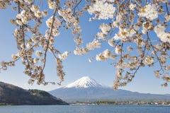 Fujisan i Sakura przy Jeziornym Kawaguchiko Obraz Stock