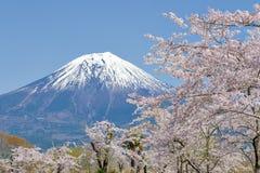 Fujisan i Sakura przy Jeziornym Tanuki Obraz Royalty Free