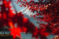 Fujisan, il monte Fuji è il più alta montagna nel Giappone con l'autunno Fotografia Stock Libera da Diritti