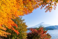 Fujisan and maple tree in Lake Kawaguchi. Outdoor beautiful scenery landscape royalty free stock photo