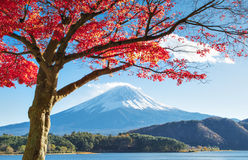 Fujisan and Momiji at Lake Kawaguchiko. Fuji Mountain and Momiji in Autumn at Lake Kawaguchiko royalty free stock photo