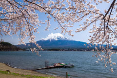 Fujisan Mountain with cherry blossom in spring, Kawaguchiko lake, Japan Royalty Free Stock Images