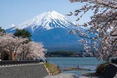 Fujisan Mountain with cherry blossom in spring, Kawaguchiko lake, Japan Royalty Free Stock Photo