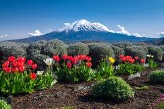 Fujisan Mountain with colorful tulip in spring, Kawaguchiko lake, Japan Stock Image