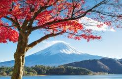 Fujisan och Momiji på sjön Kawaguchiko Fotografering för Bildbyråer