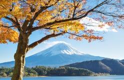 Fujisan och Momiji på sjön Kawaguchiko Arkivfoto