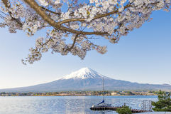 Fujisan and Sakura at Lake Kawaguchiko. Fujisan and Sakura Branches at Lake Kawaguchiko Cherry Blossom Spring Season Festival royalty free stock photos