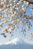 Fujisan and Sakura at Lake Kawaguchiko. Fujisan and Sakura Branches at Lake Kawaguchiko Cherry Blossom Spring Season Festival stock photography