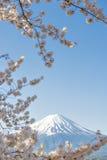 Fujisan and Sakura at Lake Kawaguchiko. Fujisan and Sakura Branches at Lake Kawaguchiko Cherry Blossom Spring Season Festival stock photo