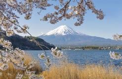 Fujisan and Sakura at Lake Kawaguchiko Royalty Free Stock Photo
