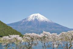 Fujisan and Sakura at Lake Tanuki Stock Images