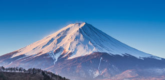 Fujisan in summer Royalty Free Stock Photo