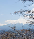 Fujiyama mountain with cherry blossom Stock Images