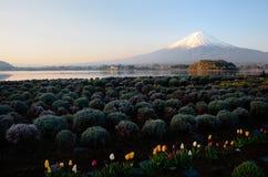 Fujiyama Mountain, Japan Stock Photos
