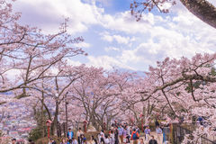 FUJIYOSHIDA, JAPAN - April 23, 2017:Mt Fuji with Cherry blossom. Sakura in spring season the most famous place in Japan to traveling Royalty Free Stock Image