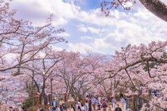 FUJIYOSHIDA JAPONIA, Kwiecień, - 23, 2017: Mt Fuji z Czereśniowym okwitnięciem obraz royalty free