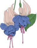 Fuksia fleurit l'ingrave Images stock
