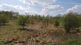 Fuktig biotope i nord av Berlin, den tyska huvudstaden, i vår Arkivfoto
