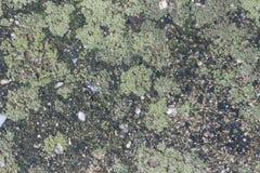 Fuktig grön lav Fotografering för Bildbyråer