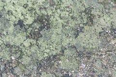 Fuktig grön lav Arkivfoto