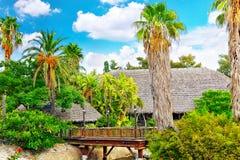 Fuktig tropisk djungel Royaltyfri Foto