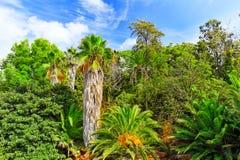 Fuktig tropisk djungel Royaltyfria Bilder