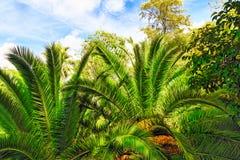 Fuktig tropisk djungel Arkivbild