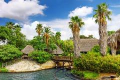 Fuktig tropisk djungel Royaltyfri Fotografi
