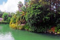 Fuktig tropisk djungel Royaltyfri Bild