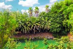 Fuktig tropisk djungel Arkivfoton