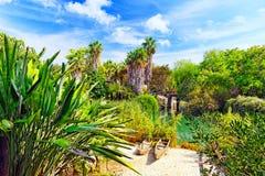 Fuktig tropisk djungel Royaltyfria Foton