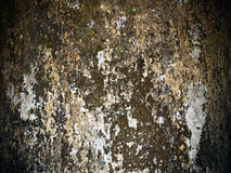 fuktiga gammala väggar royaltyfri fotografi