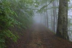 Fuktighet i skogen Arkivfoton