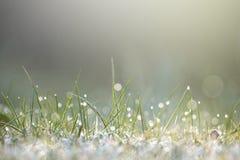 Fuktigt gräs i solljus arkivfoto