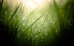 Fuktigt morgongräs Fotografering för Bildbyråer