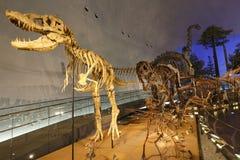 Fukui Prefectural dinosauriemuseum Arkivbild