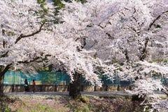 FUKUSHIMA, JAPÃO - ABRIL 15,2016: Castelo de Tsuruga cercado pelo hund Imagens de Stock Royalty Free