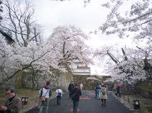 Fukushima Japan-April 16, 2018: Tsuruga slott eller Aizuwakamats Royaltyfria Bilder